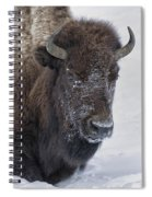 Frosty Morning Bison Spiral Notebook