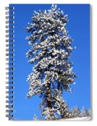 Frosty Pine Spiral Notebook