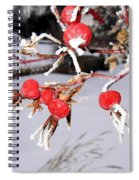 Frosty Rosehips Spiral Notebook