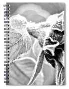 Frosty Textures Spiral Notebook