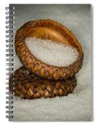Frozen Acorn Cupule Spiral Notebook