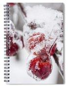 Frozen Crab Apples On Snowy Branch Spiral Notebook