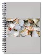 Frozen Fish On Ice Spiral Notebook