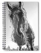 Frozen Pony Spiral Notebook