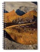 Frozen Raindrops Spiral Notebook