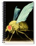 Fruit Fly Sem Spiral Notebook