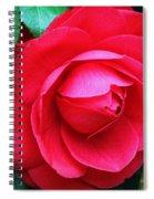 Fuchsia Camellia In Pastel Spiral Notebook