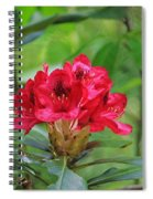 Fuchsia Rhododendron Moore State Park Spiral Notebook