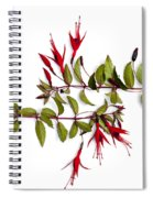 Fuchsia Stems On White Spiral Notebook