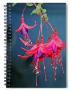 Fuchsia Spiral Notebook