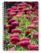 Fuchsia Zinnia Spiral Notebook