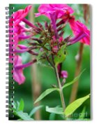 Fucia  Tubular Flowers Spiral Notebook