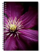 Full Bloom Clematis  Spiral Notebook