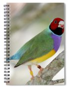 Full Of Color Spiral Notebook