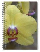 Fuller's Sunset Orchid Spiral Notebook