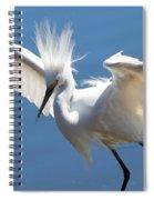 Fun Snowy Egret Spiral Notebook