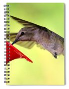 Fun Summer Hummingbird Spiral Notebook