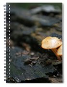Fungus 9 Spiral Notebook