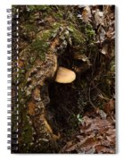 Fungus In Stump Hole Spiral Notebook