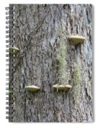 Fungus On Tree Spiral Notebook
