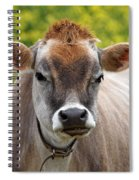 Funny Jersey Cow -square Spiral Notebook