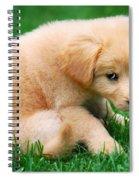 Fuzzy Golden Puppy Spiral Notebook