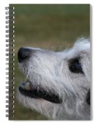 Fuzzy Whiskers Spiral Notebook