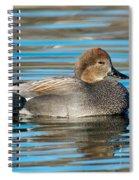 Gadwall Duck Drake Swimming Spiral Notebook