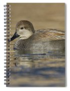 Gadwall On Icy Pond Spiral Notebook