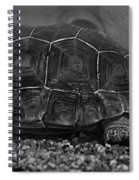 Galapagos Tortoise Baby Spiral Notebook