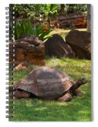 Galapagos Turtle At Honolulu Zoo Spiral Notebook