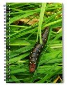 Gallium Sphinx Caterpillar Spiral Notebook