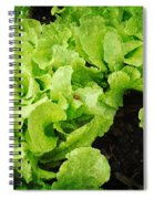 Garden Fresh Baby Lettuce And Lady Bug Spiral Notebook