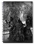 Garden Of Gethsemane Olive Tree Spiral Notebook