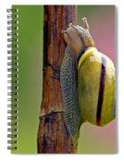 Garden Snail Bright Spiral Notebook