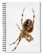 Garden Spider Profile Spiral Notebook