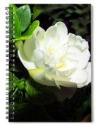 Gardenia 2013 Spiral Notebook