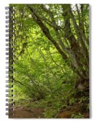 Garibaldi Old Growth Cedars Spiral Notebook