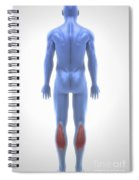 Gastrocnemius Muscle Spiral Notebook