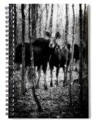 Gathering Of Moose Spiral Notebook