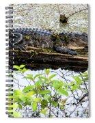 Gator Camoflage Spiral Notebook