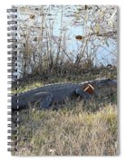 Gator Football Spiral Notebook