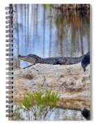 Gator On The Mound Spiral Notebook