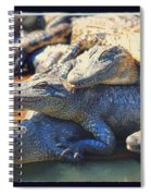 Gator Pals Spiral Notebook