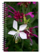Gaura Lindheimeri Whirling Butterflies With Agastache Ava Spiral Notebook
