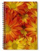 Gazania Painterly Spiral Notebook