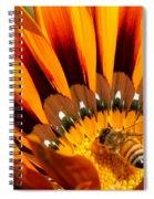 Gazania Pollination Spiral Notebook