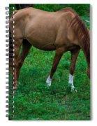 Gazing Horse Spiral Notebook