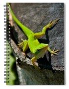 Gecko Spiral Notebook