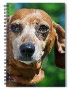 Gem The Miniature Dachshund Spiral Notebook